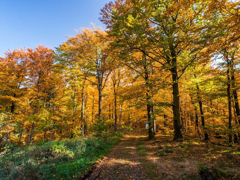 Hiking trail through an autumnal forest at Wilzenberg.